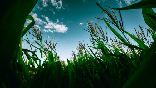구름, 녹색, 농작물, 농장의 무료 스톡 사진