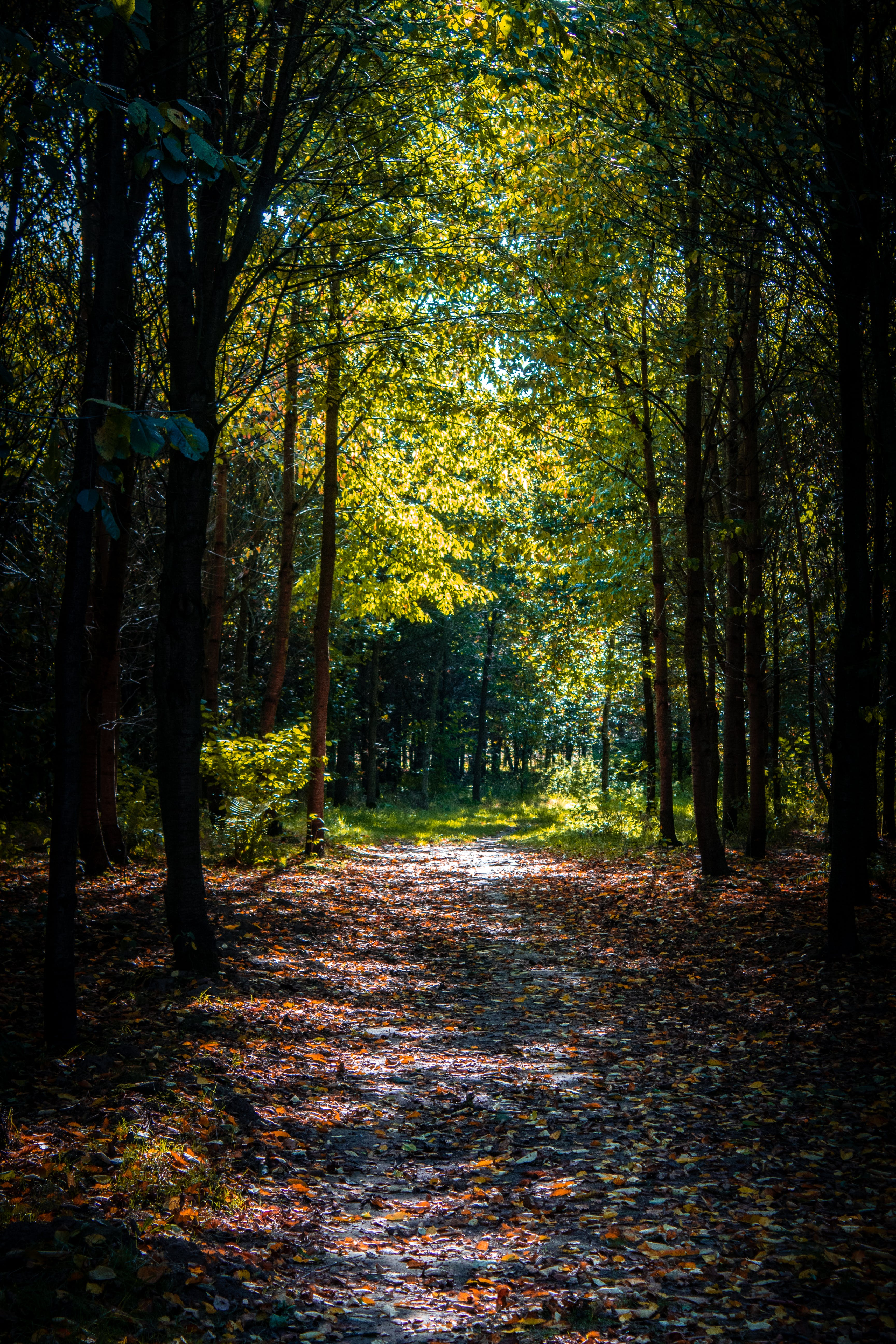 Foot Path In the Middle of a Forest