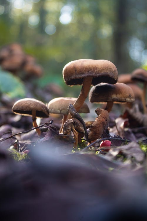 冬季, 冬季景觀, 森林蘑菇, 燈光 的 免費圖庫相片