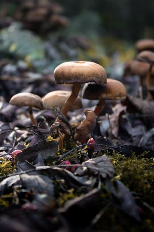 冬季, 森林蘑菇, 蘑菇 的 免費圖庫相片