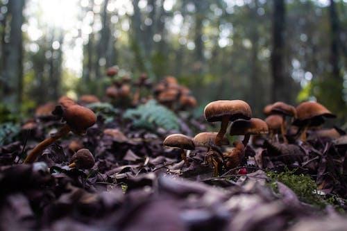 冬季, 冷, 棕色, 森林蘑菇 的 免費圖庫相片