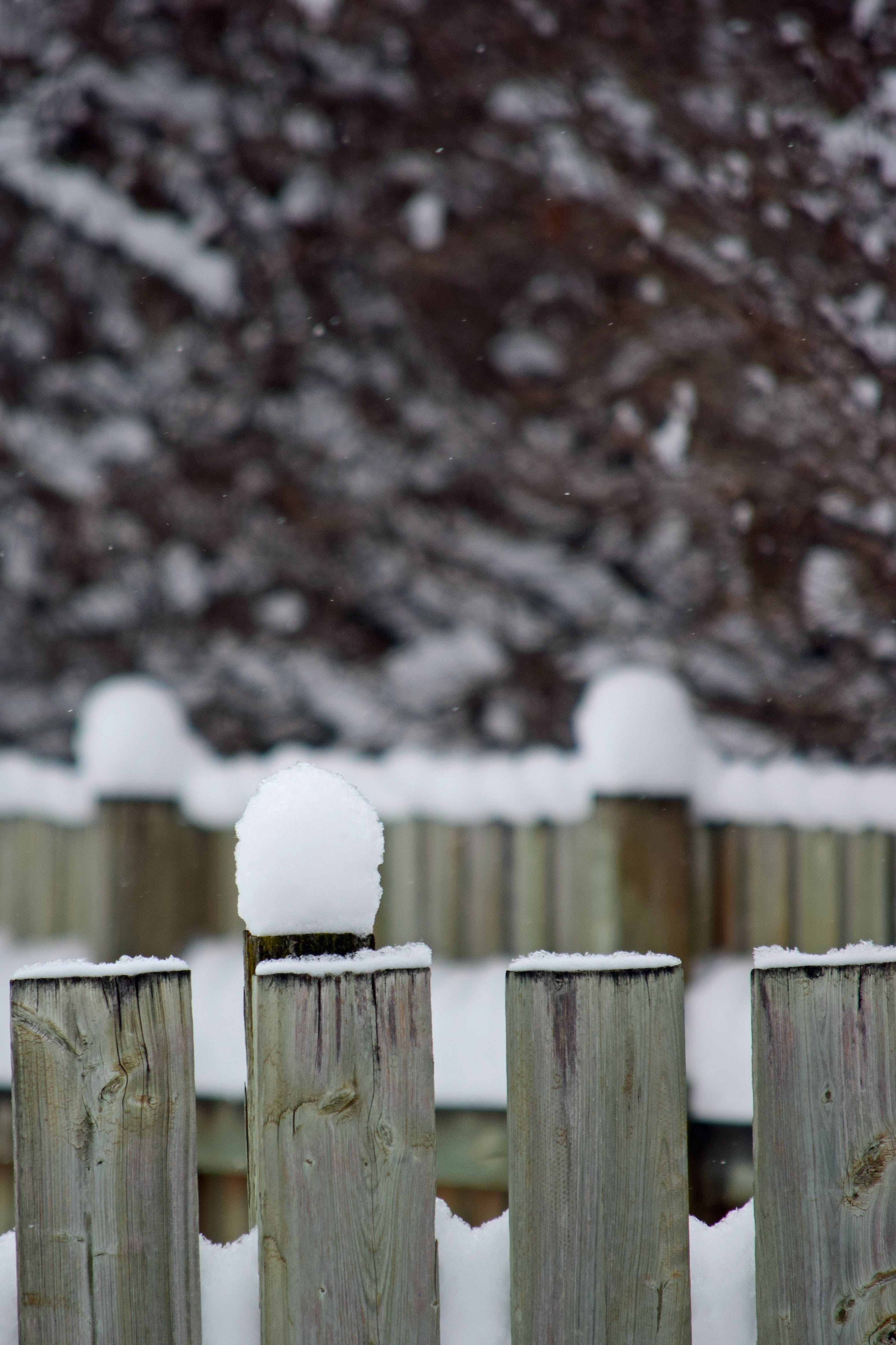 Free stock photo of fence, snow, winter