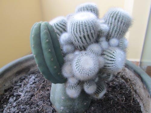 Ilmainen kuvapankkikuva tunnisteilla kasvi, tehdas