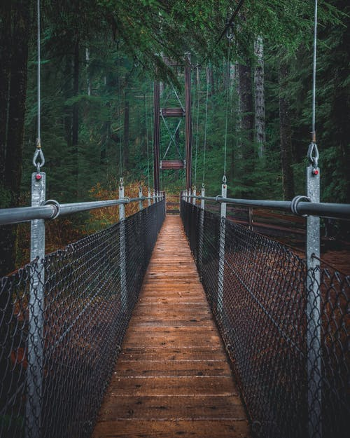 Fotobanka sbezplatnými fotkami na tému lávka, les, most, Oregon
