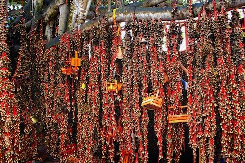 คลังภาพถ่ายฟรี ของ ghanta, จิตวิญญาณ, นมัสการ, ประเพณี