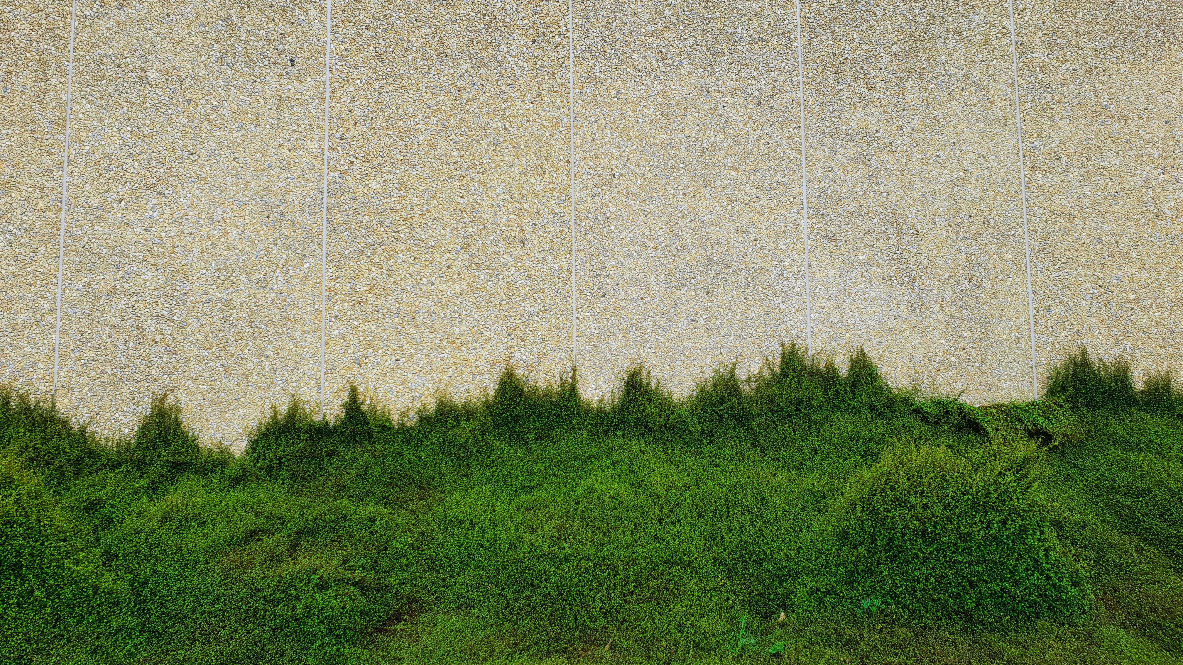 Kostenloses Stock Foto zu backsteinmauer, betonmauer, busch, grüne wand
