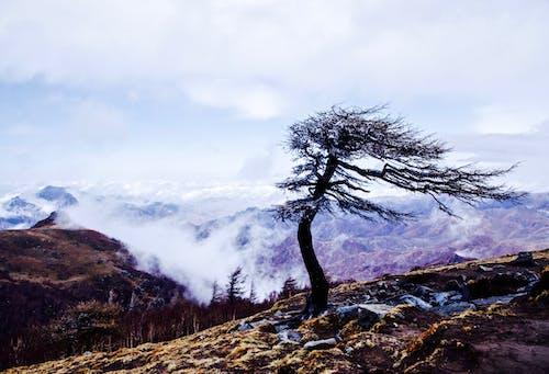 Безкоштовне стокове фото на тему «гора, дерево, зима, сніг»