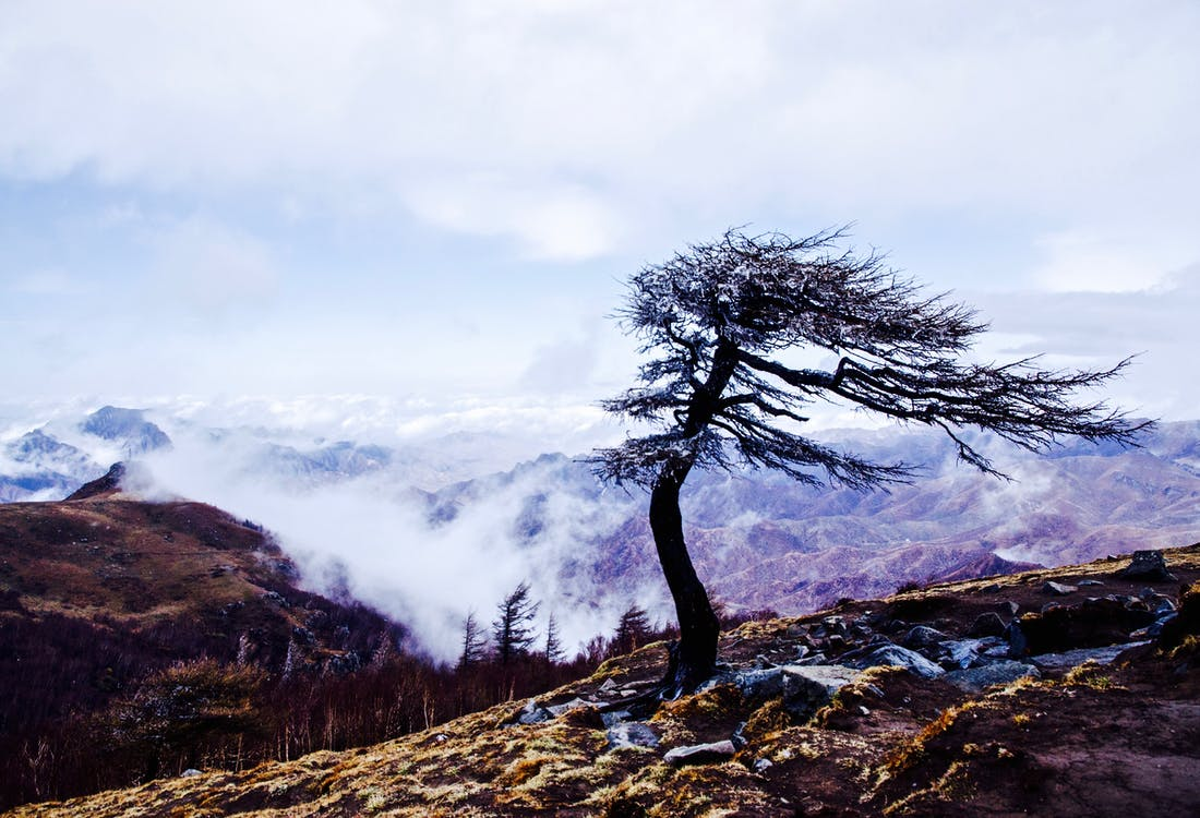 ağaç, bulut, dağ