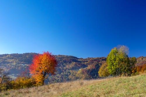 Δωρεάν στοκ φωτογραφιών με βουνό, γαλάζιος ουρανός, δέντρα