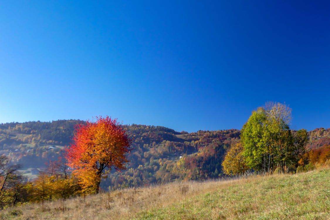 berg, blå himmel, träd