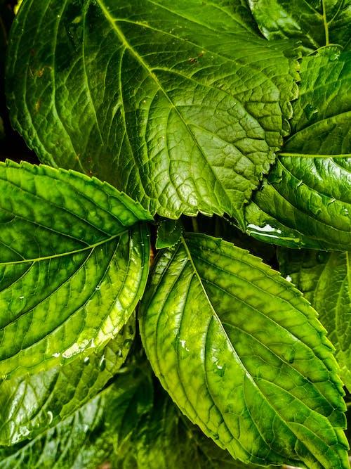 녹색, 클로즈업의 무료 스톡 사진
