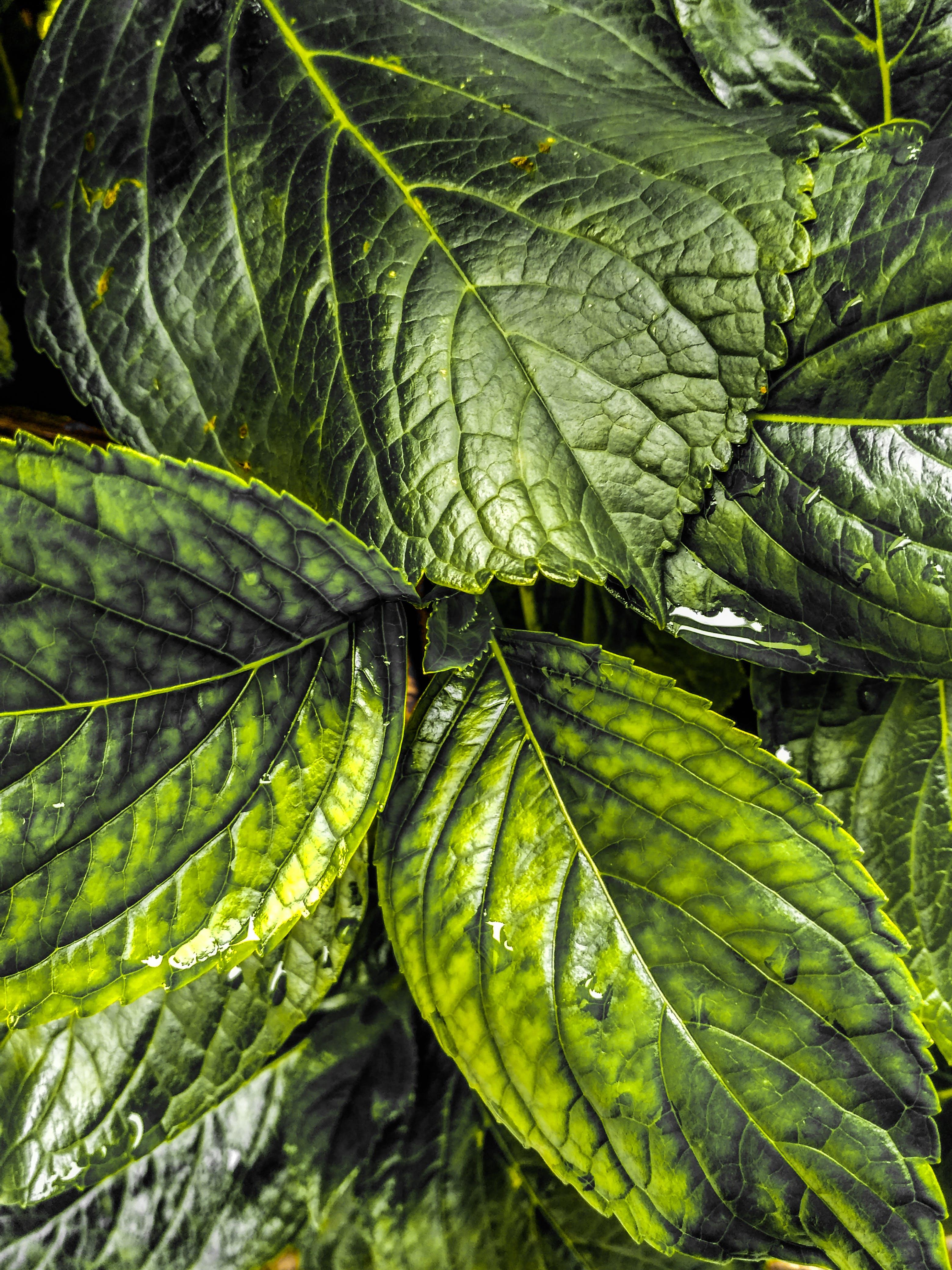 Free stock photo of dark green, dark green plants, fallen leaves