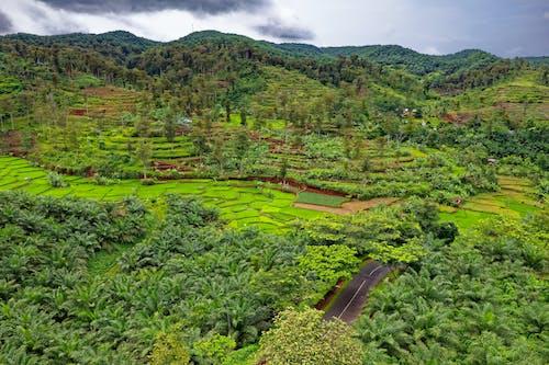 Základová fotografie zdarma na téma denní světlo, farma, hřiště, indonésie
