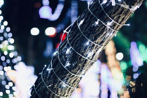 คลังภาพถ่ายฟรี ของ ต้นคริสต์มาส, ผลแสง, ลูกบอลคริสต์มาส, หลอดไส้