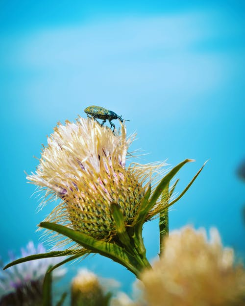 Green Weevil Perching on White-petaled Flower