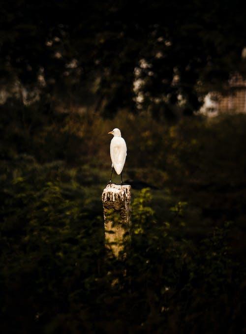 Ilmainen kuvapankkikuva tunnisteilla 4k taustakuva, eläimen muotokuva, kurki, lintujen tarkkailu