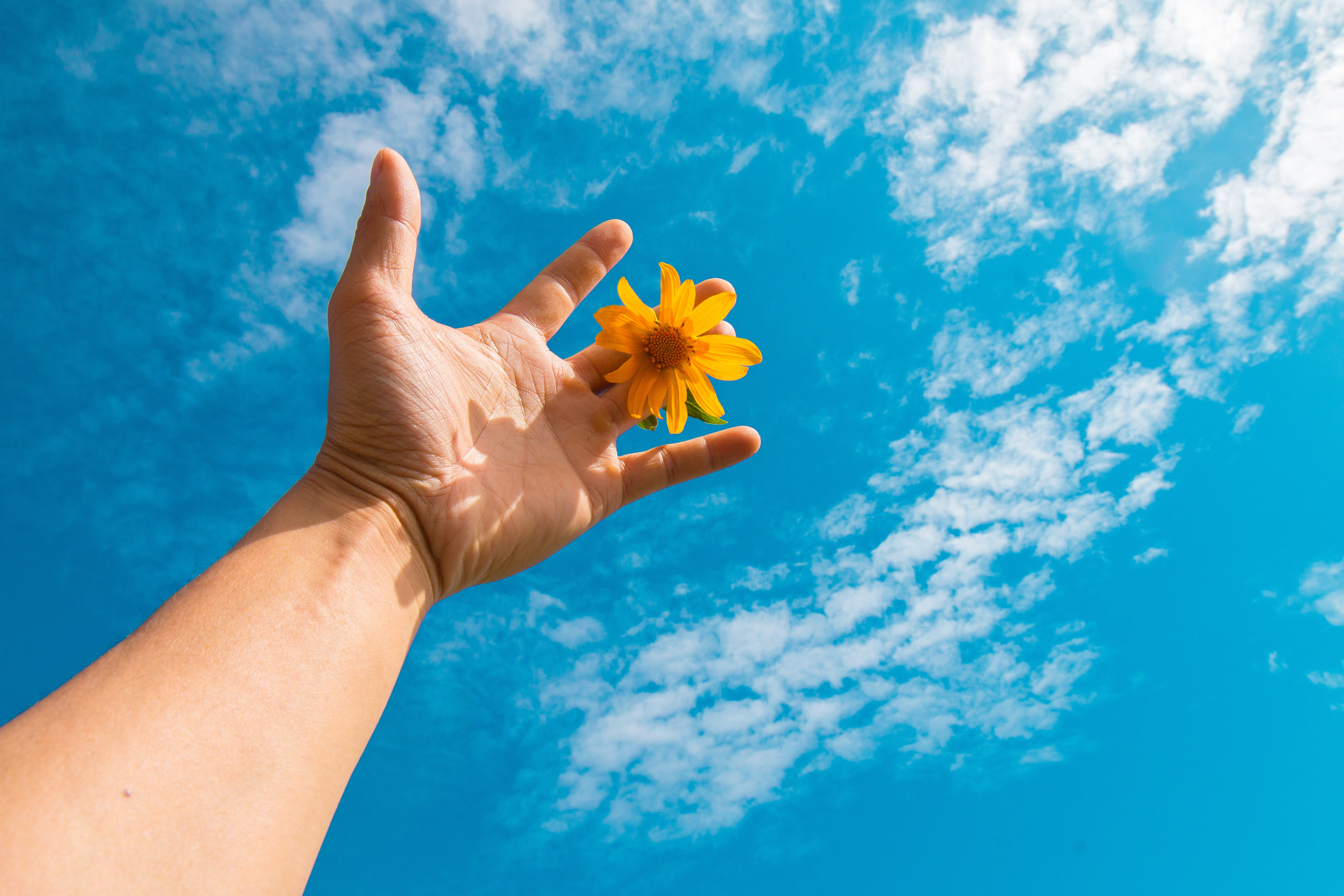 Low Angle Photography Of Person Holding Yellow Daisy Flower
