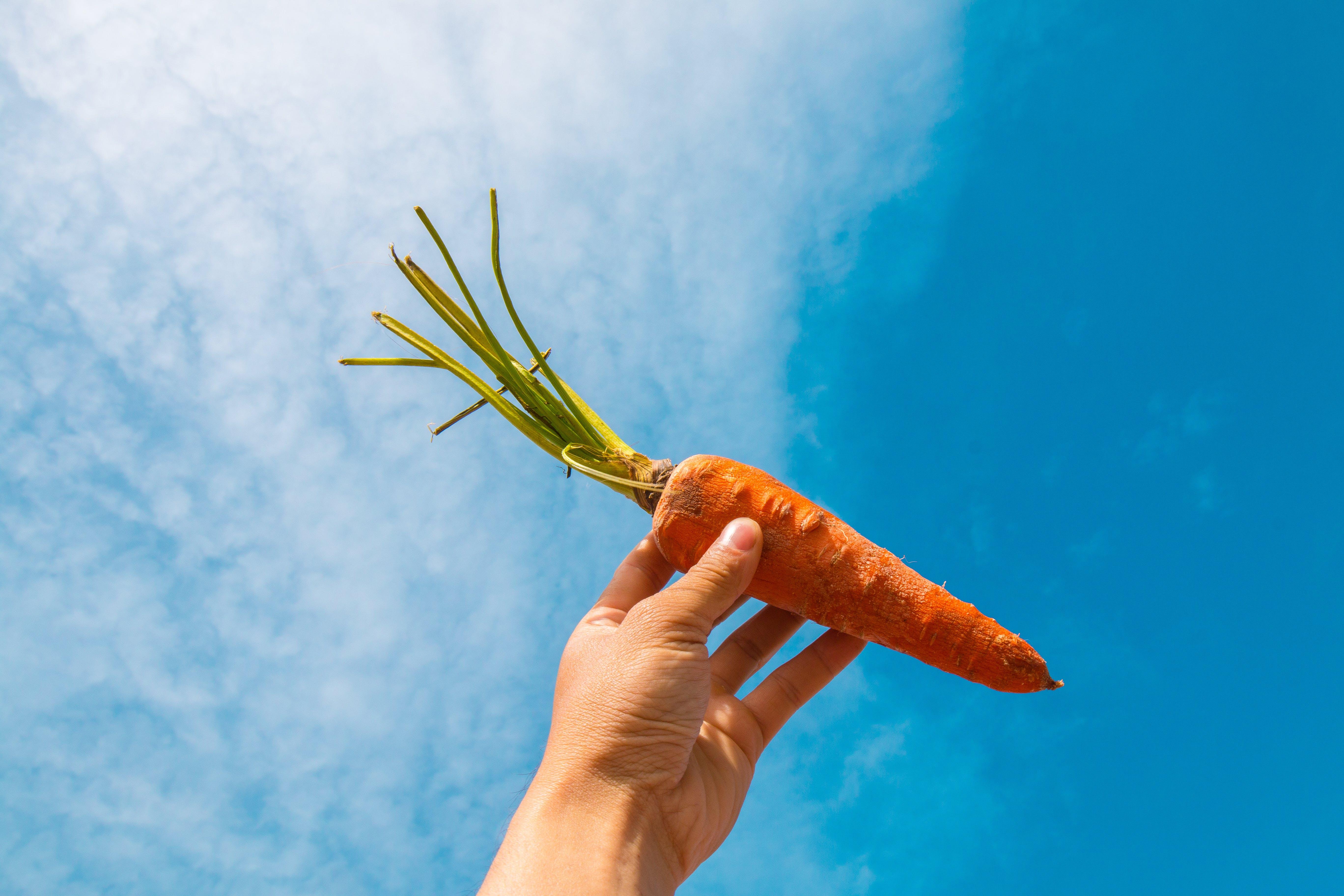 Orange Carrot