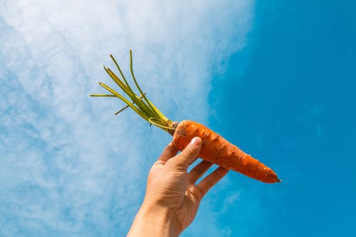 Základová fotografie zdarma na téma jídlo, mrkev, ruka