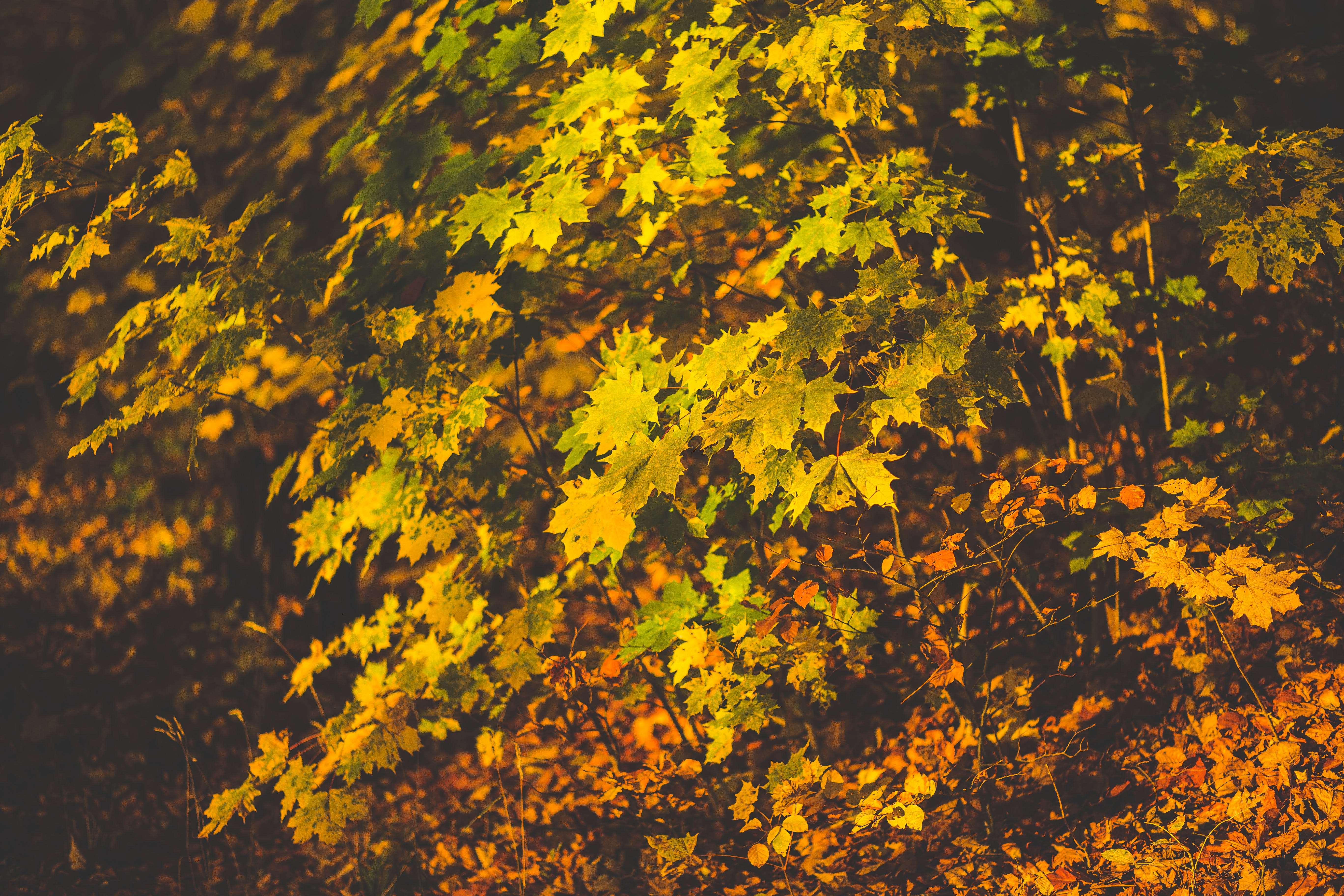 Free stock photo of leaves