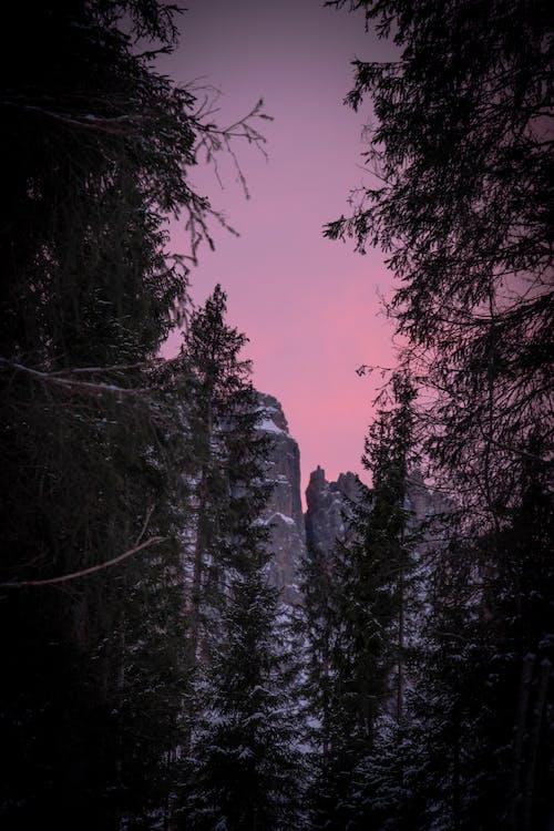 天性, 樹木, 洛磯山脈, 環境 的 免费素材照片