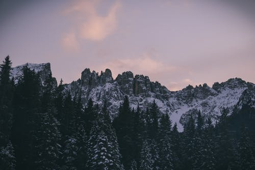 Безкоштовне стокове фото на тему «гора, Денне світло, дерева, застуда»