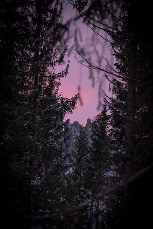Ilmainen kuvapankkikuva tunnisteilla aamu, hämärä, luonto, metsä