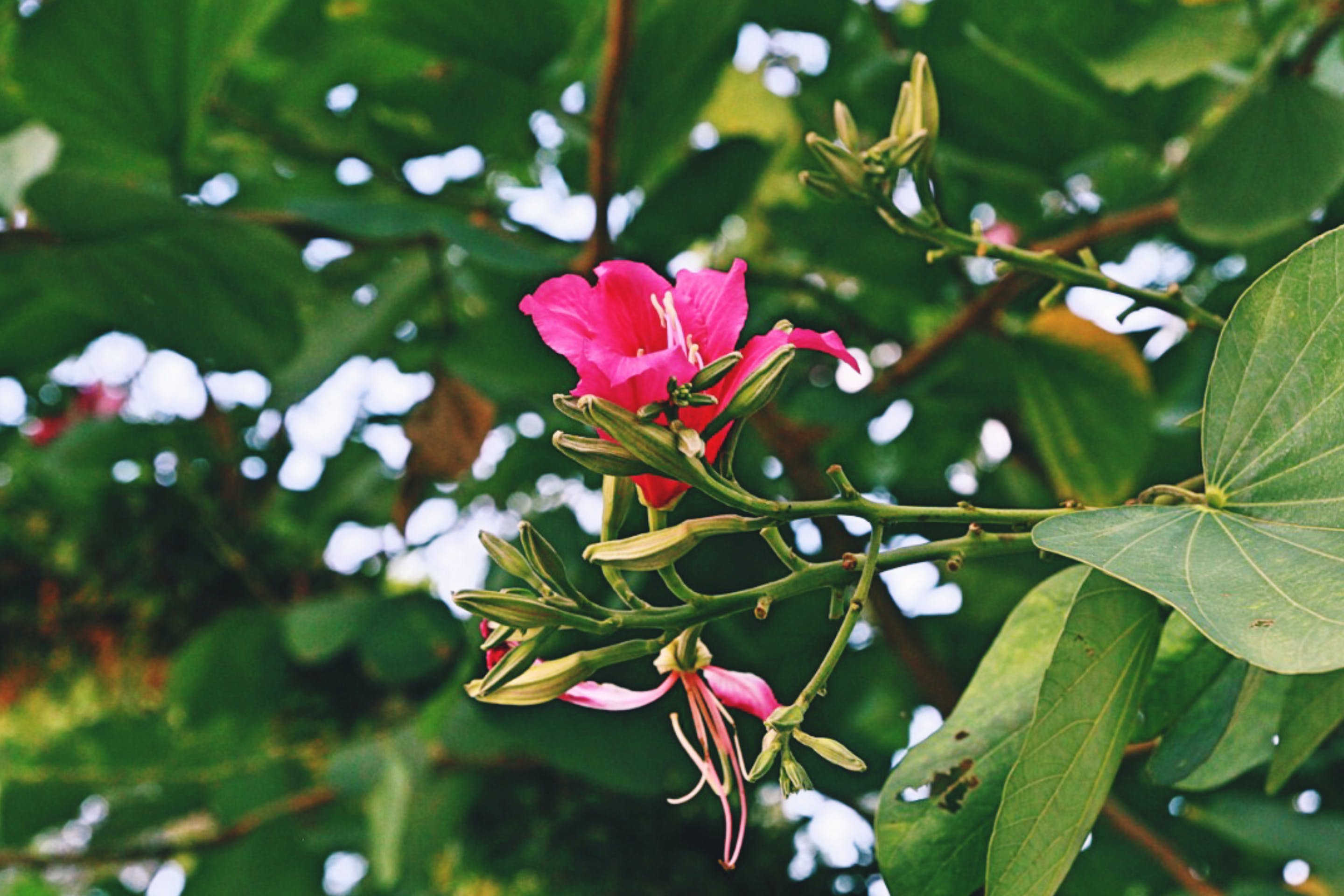Free stock photo of beautiful flower, beauty in nature, fallen leaves, Pink Rose