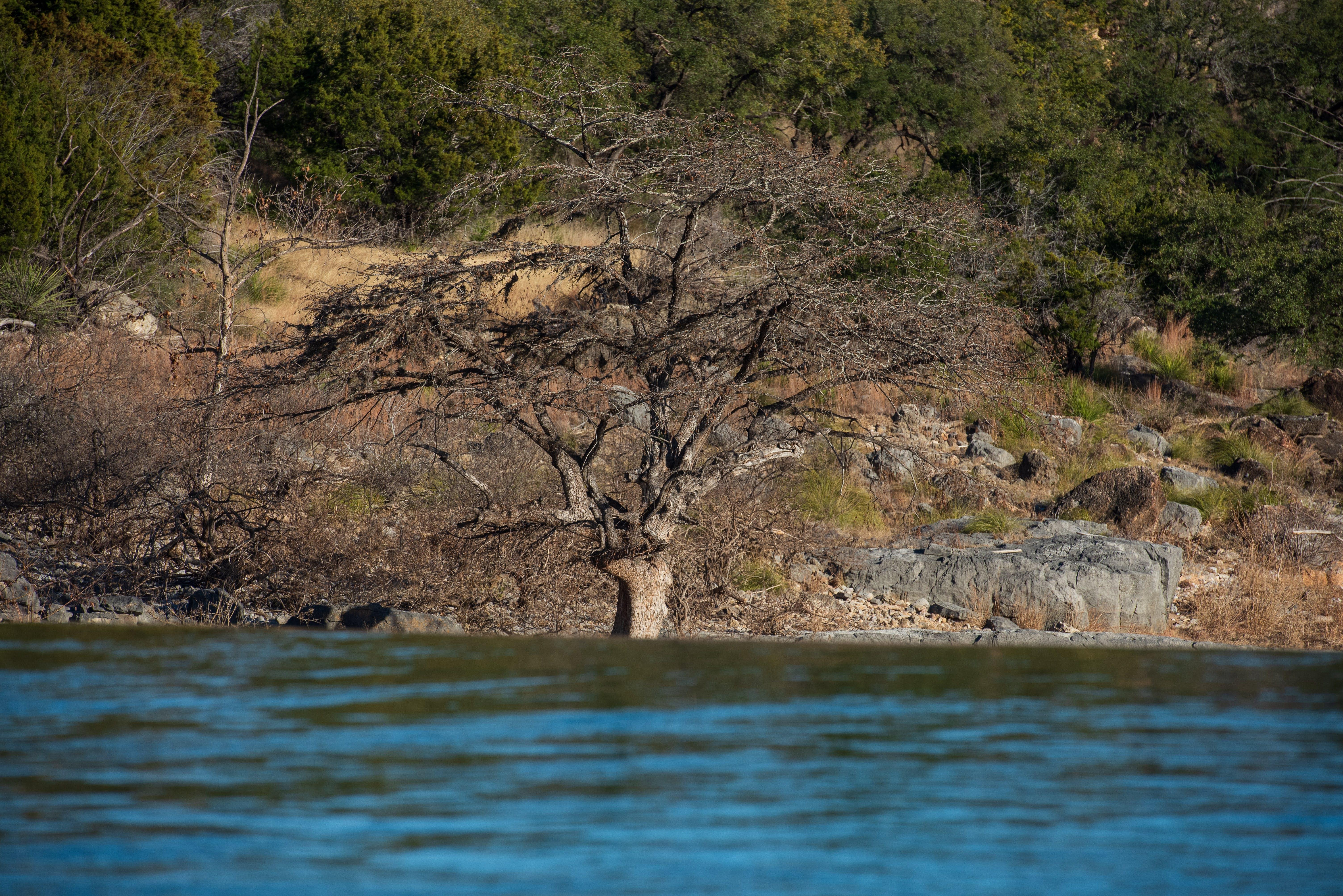 Δωρεάν στοκ φωτογραφιών με pedernales falls, waterf, τοπίο