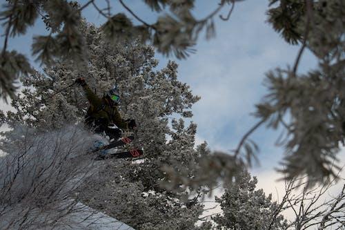 Kostenloses Stock Foto zu baum, bäume, kalt, mantel