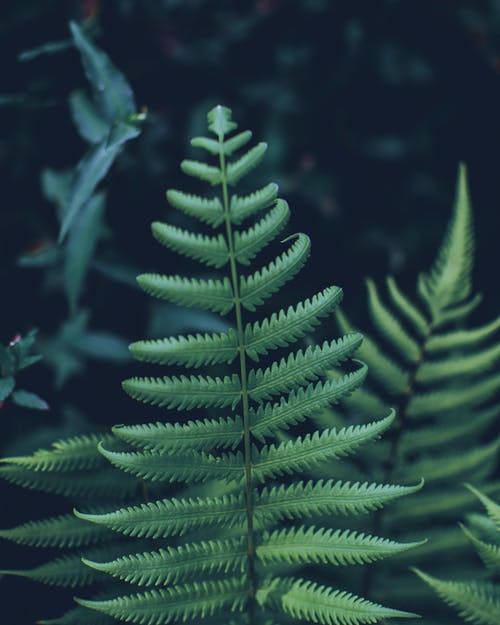 Close-Up Photo of Fern Plant