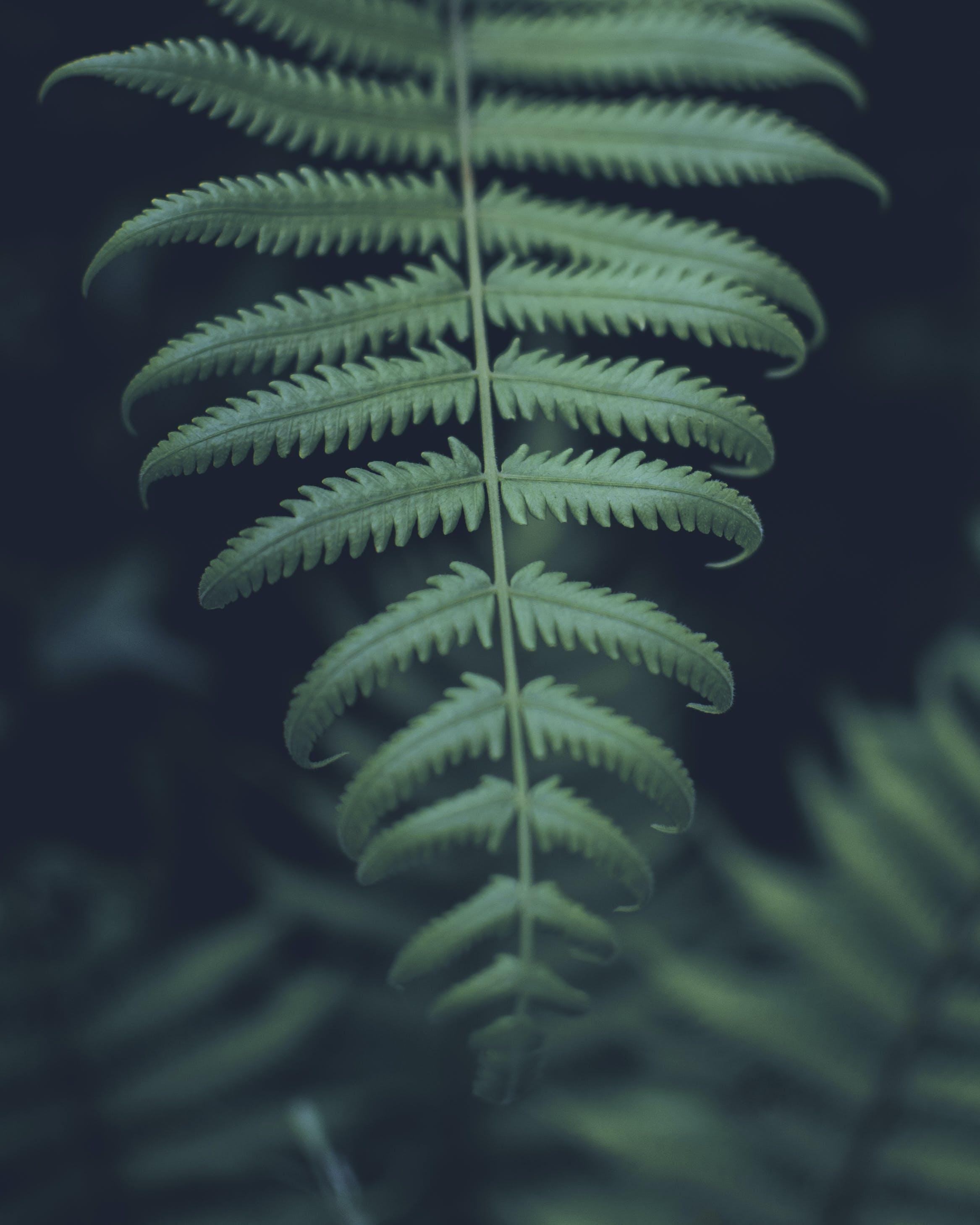 Foto profissional grátis de close, folha verde, folhas de samambaia, fronde