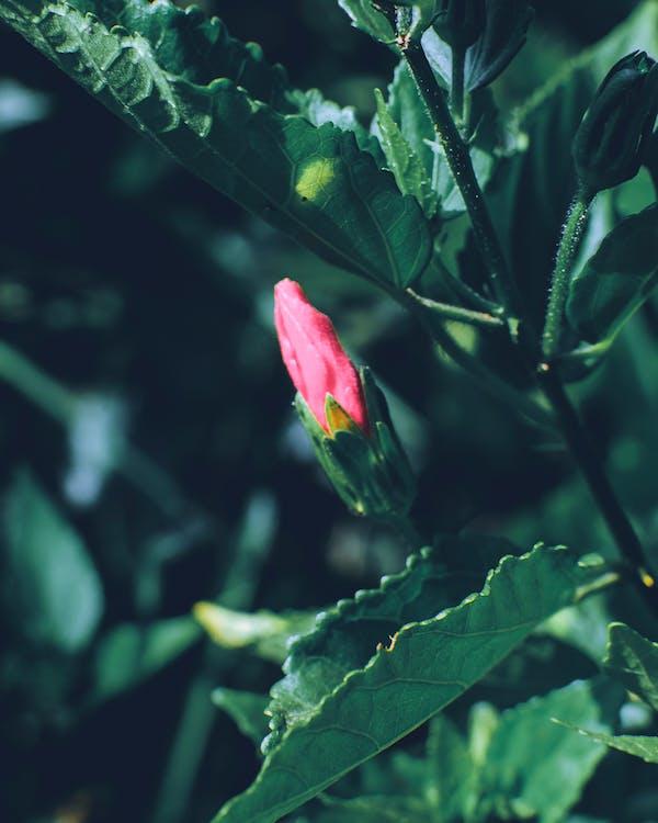 akçaağaç yaprakları, Bahçe, bitki örtüsü