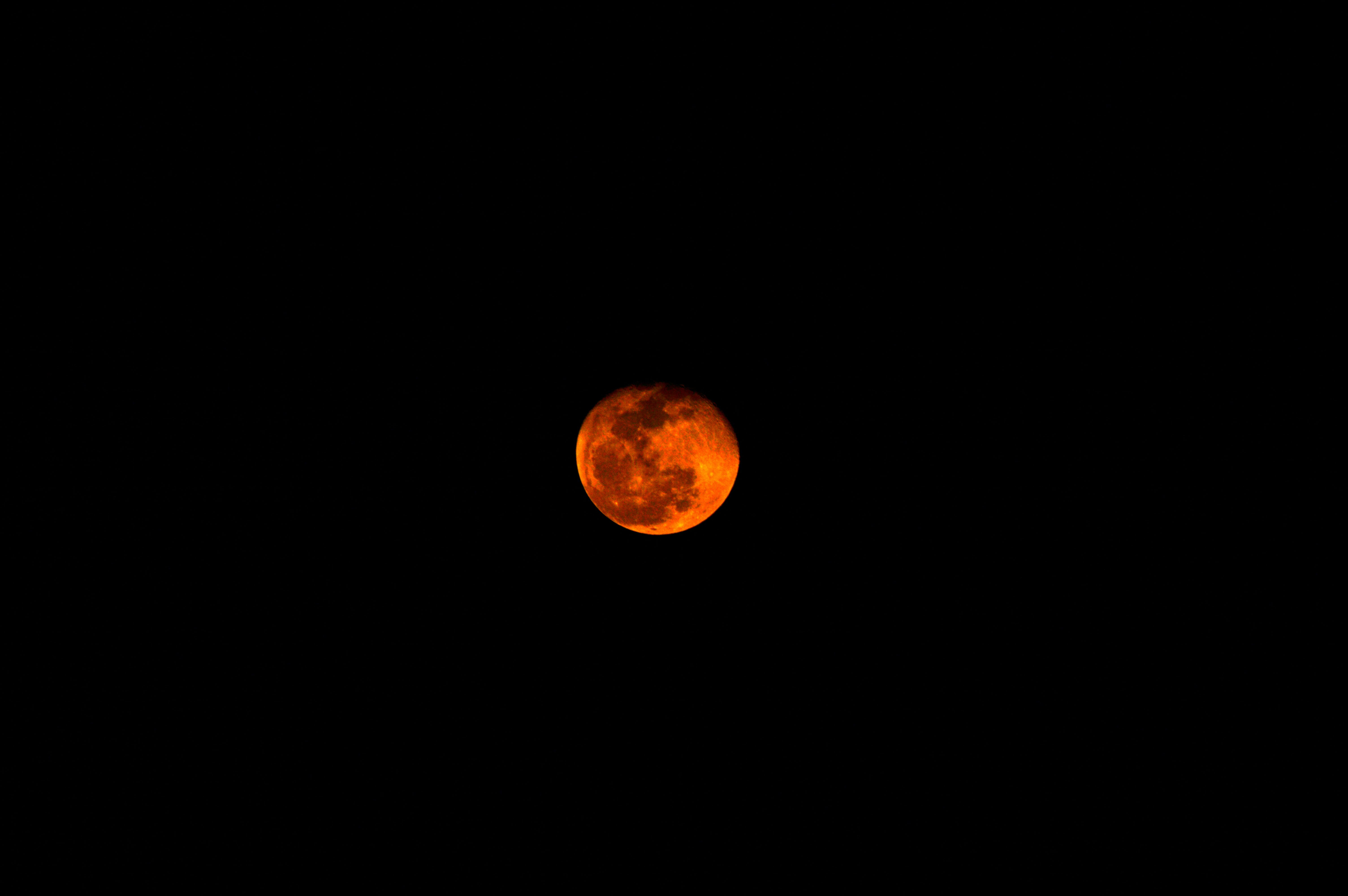 Free stock photo of blood moon, christmas moon, large moon, love moon