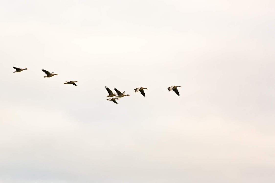 Photo of Flock Of Birds