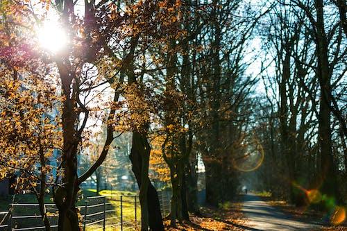 Kostenloses Stock Foto zu bäume, beratung, blätter, dämmerung