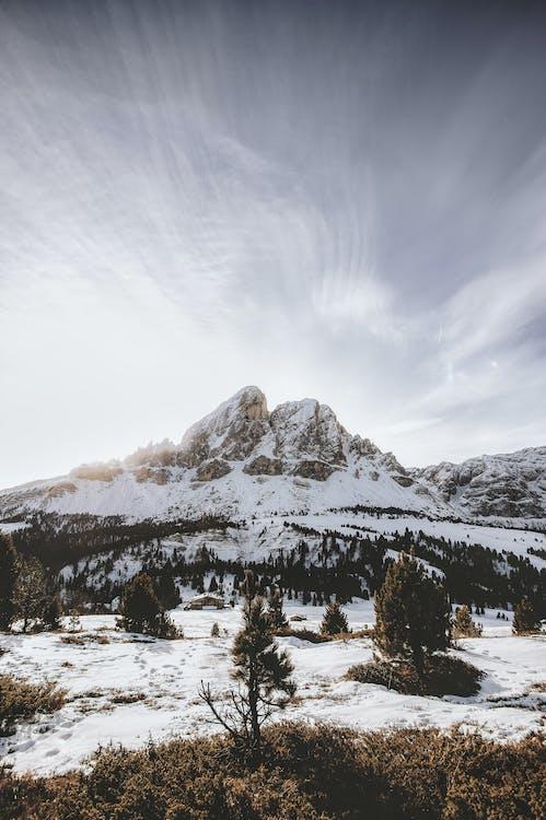 altitudine, arbori, banchiză