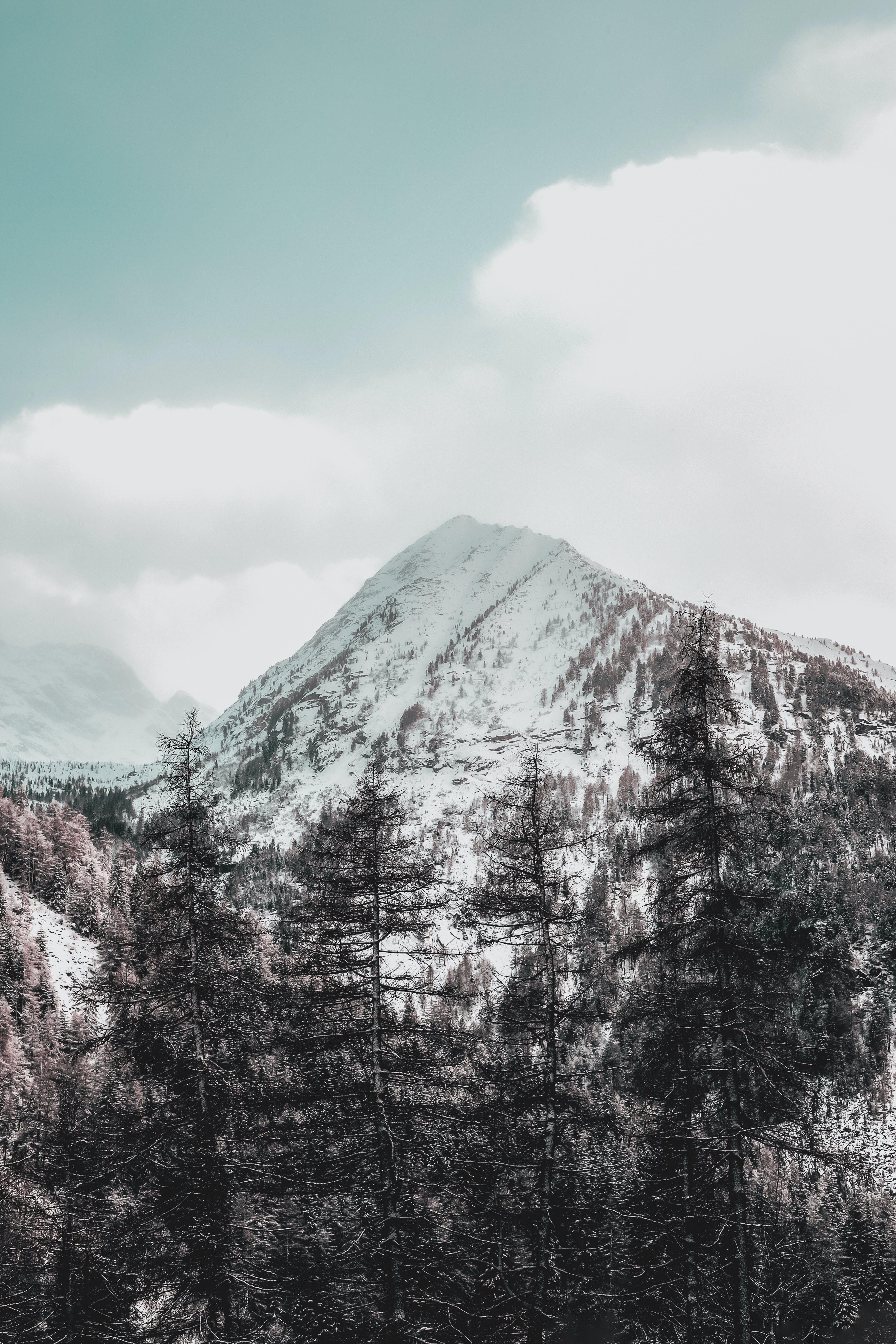 天性, 景觀, 洛磯山脈, 白雪皚皚 的 免费素材照片