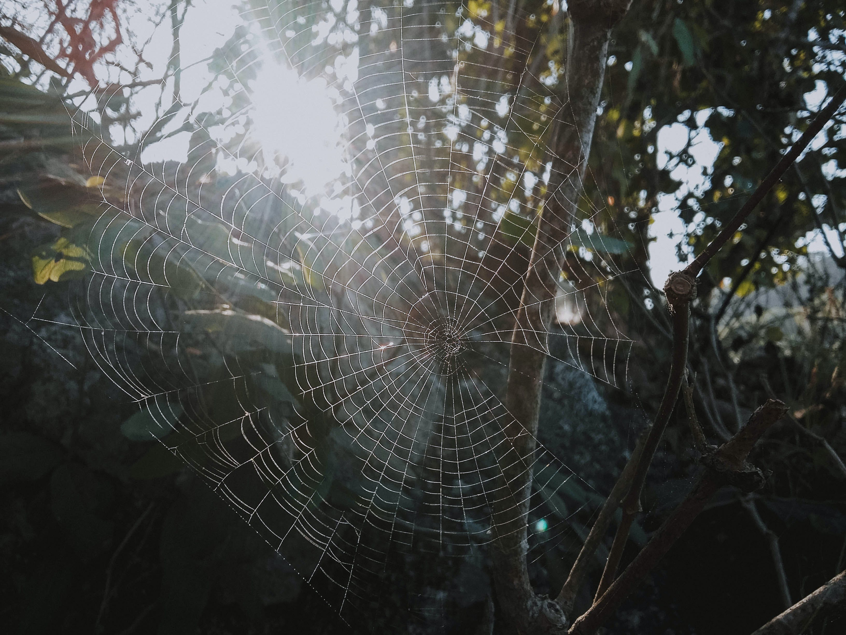Cobweb On Tree Branch