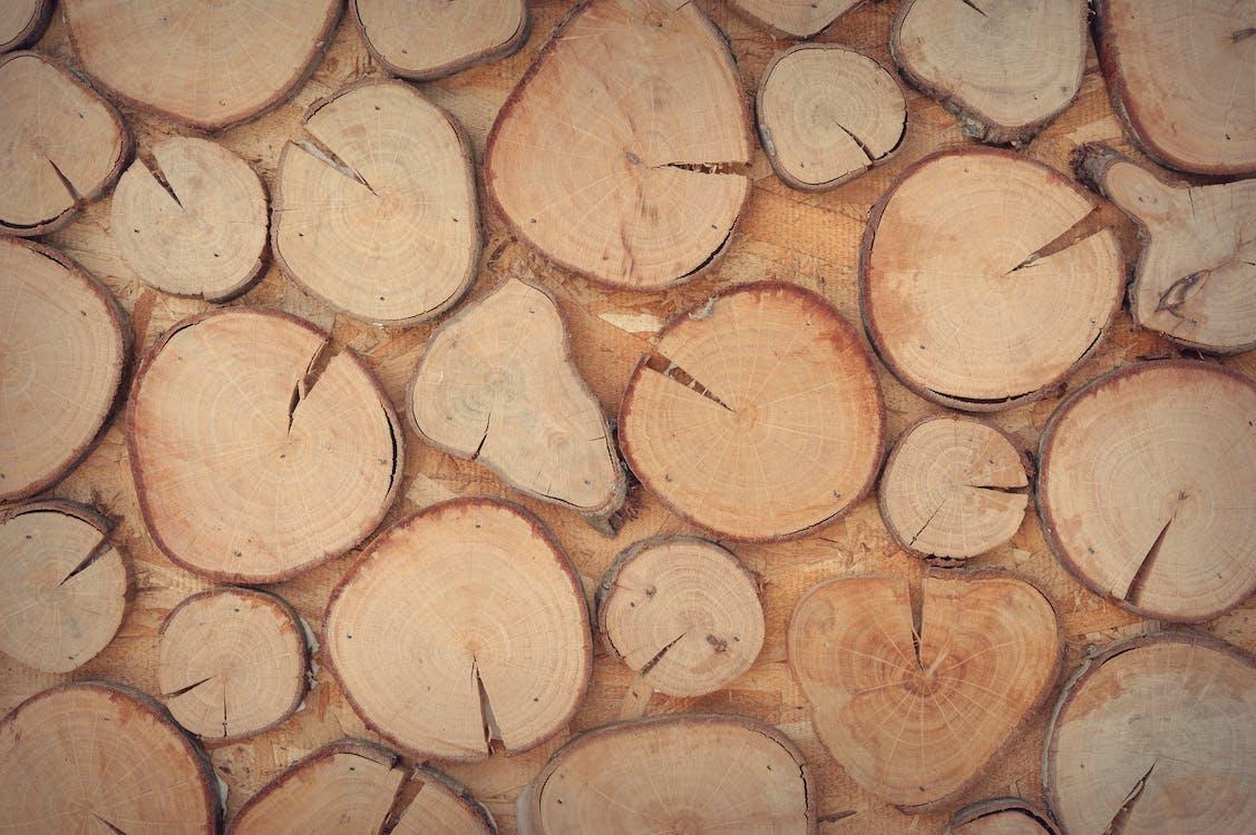 Slice of Brown Wooden Log