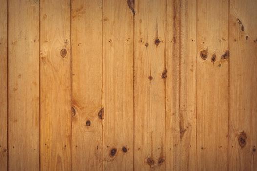 Free stock photo of wood, pattern, wall, tree