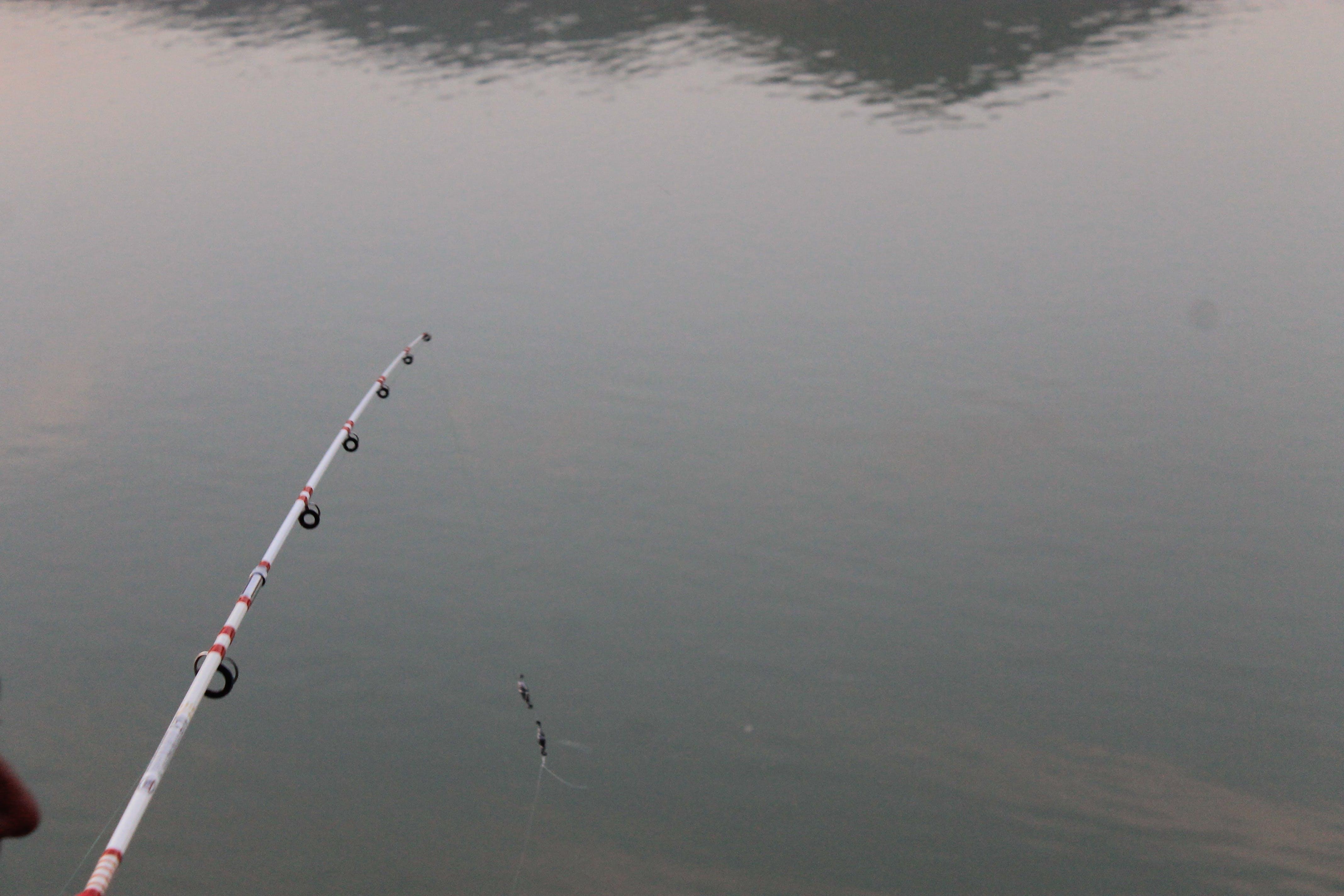 Foto profissional grátis de fisheng mushen