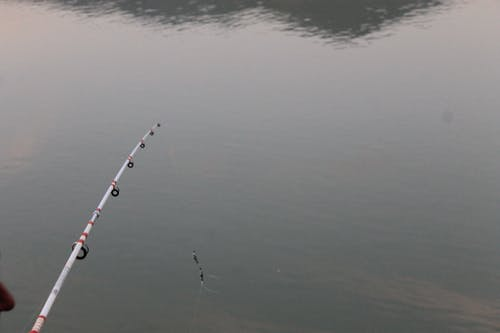 Fotos de stock gratuitas de fisheng mushen