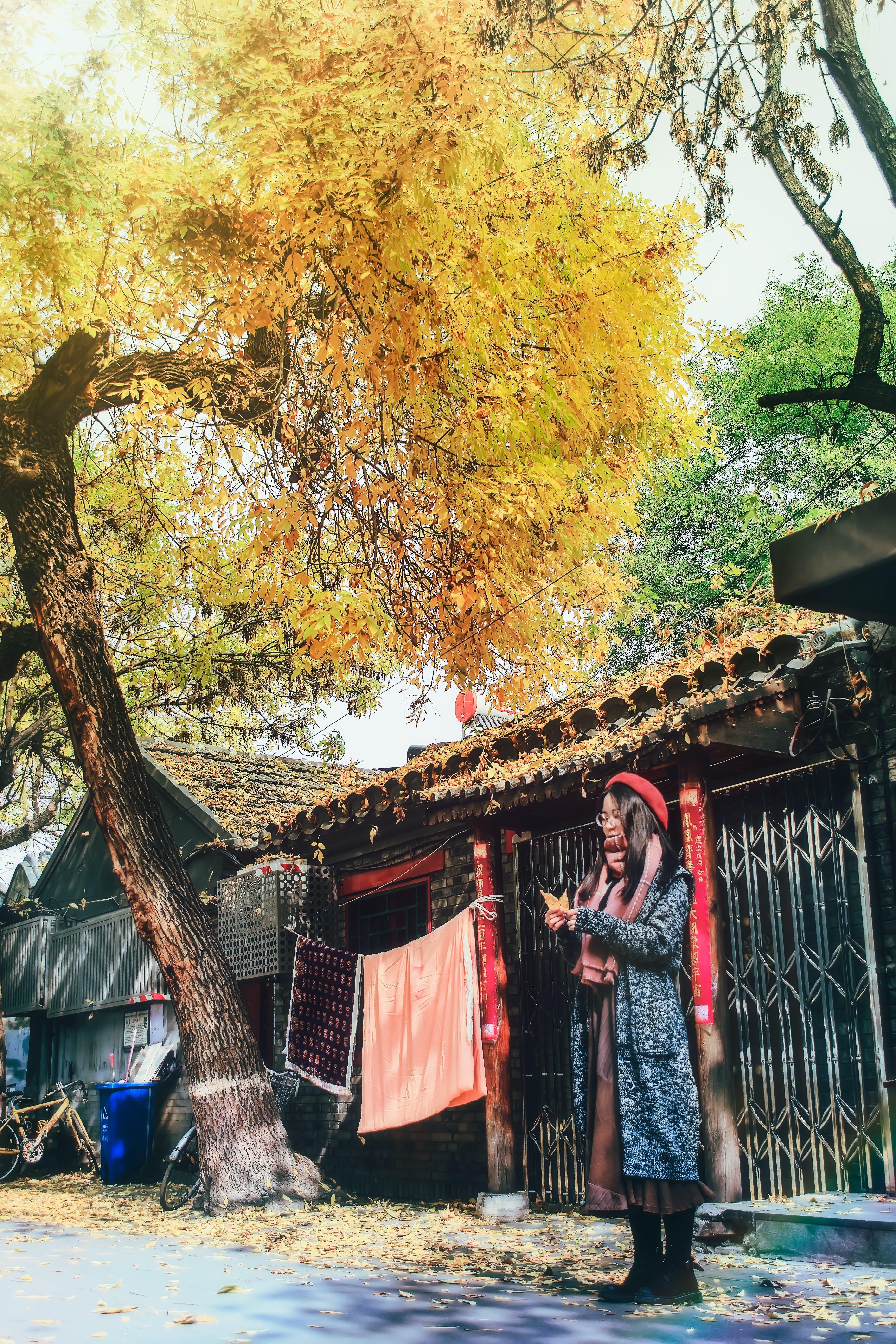 Free stock photo of 人物, 北京, 北锣鼓巷, 老房子