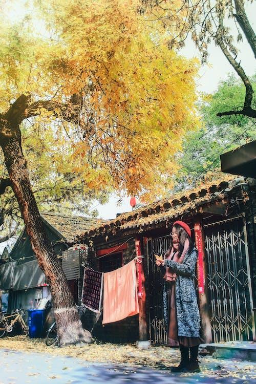 Ingyenes stockfotó 人物, 北 锣鼓 巷, 北京, 老 房子 témában