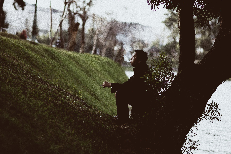 Základová fotografie zdarma na téma denní světlo, dospělý, dřevo, krajina