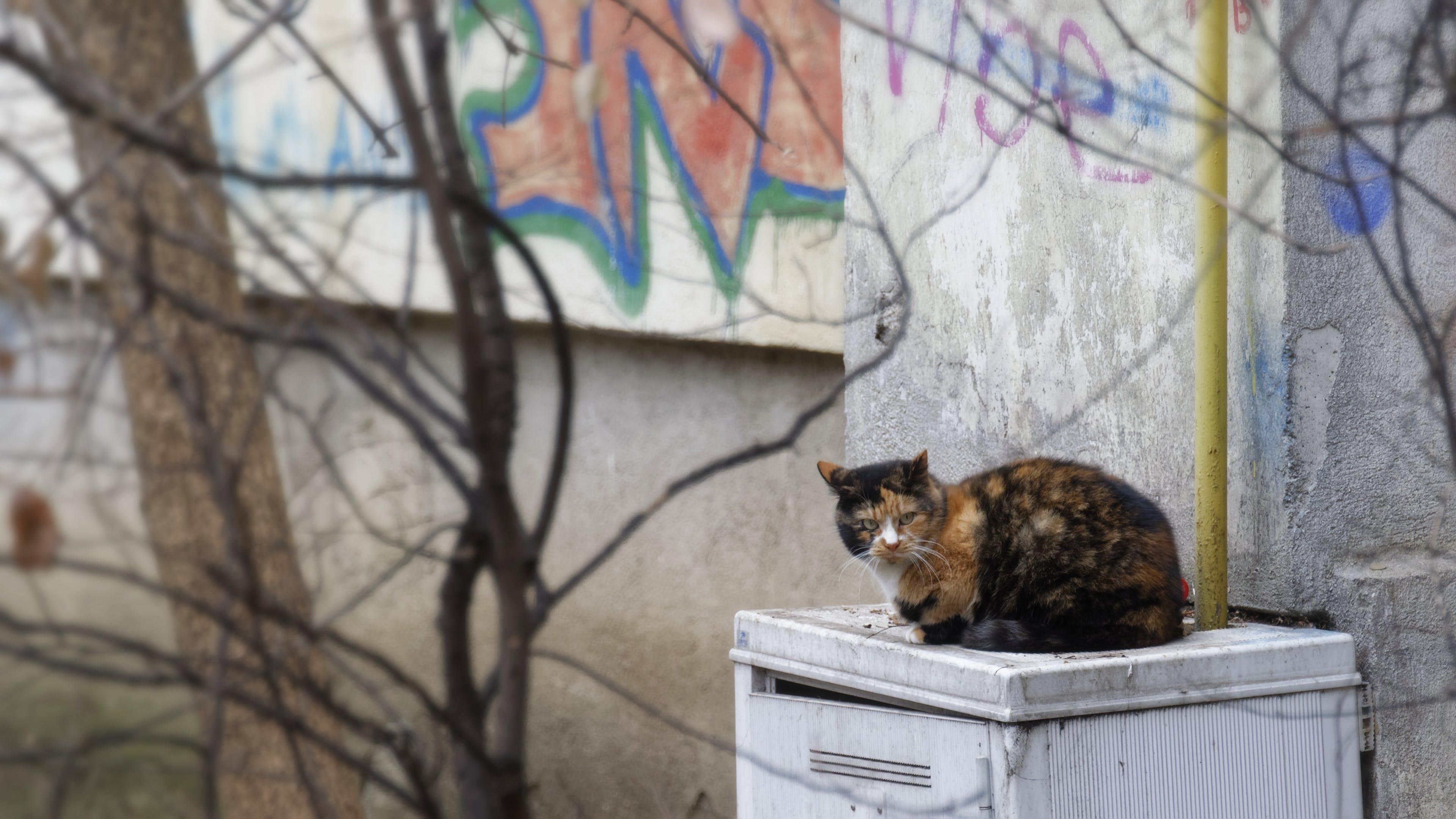 Free stock photo of apartment building, cat, feline, gas box