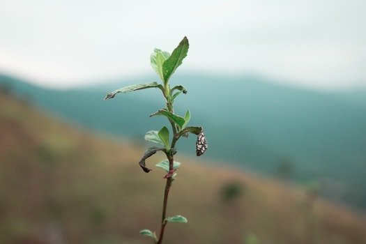 Free stock photo of nature, dry, plant, blur