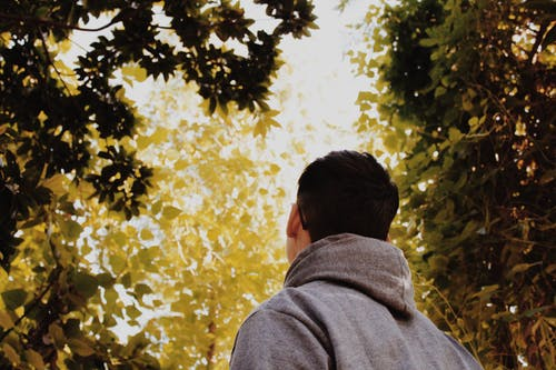 Základová fotografie zdarma na téma barva, denní světlo, krajina, lehký