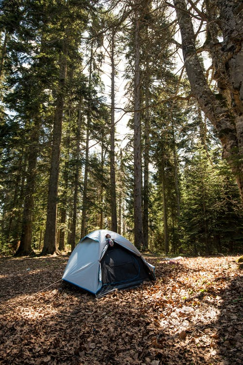 Photos gratuites de arbres, camper, camping, environnement